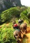 drie olifanten bereden door