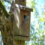 Vogelhuis met vogel verkleind